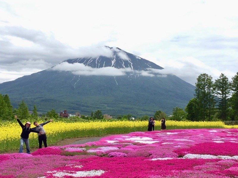 三島さんの芝桜と羊蹄山
