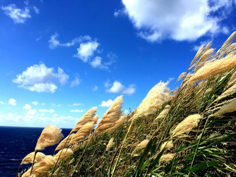 北海道秋の景色