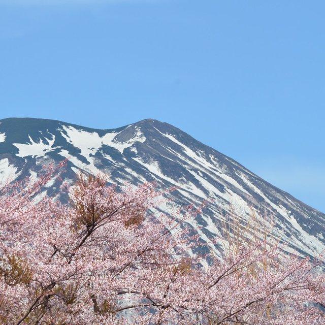 Sakura Season 2018