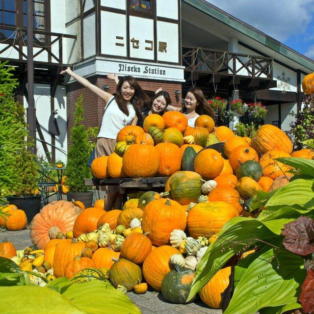 秋のニセコを彩る☆カボチャイベント
